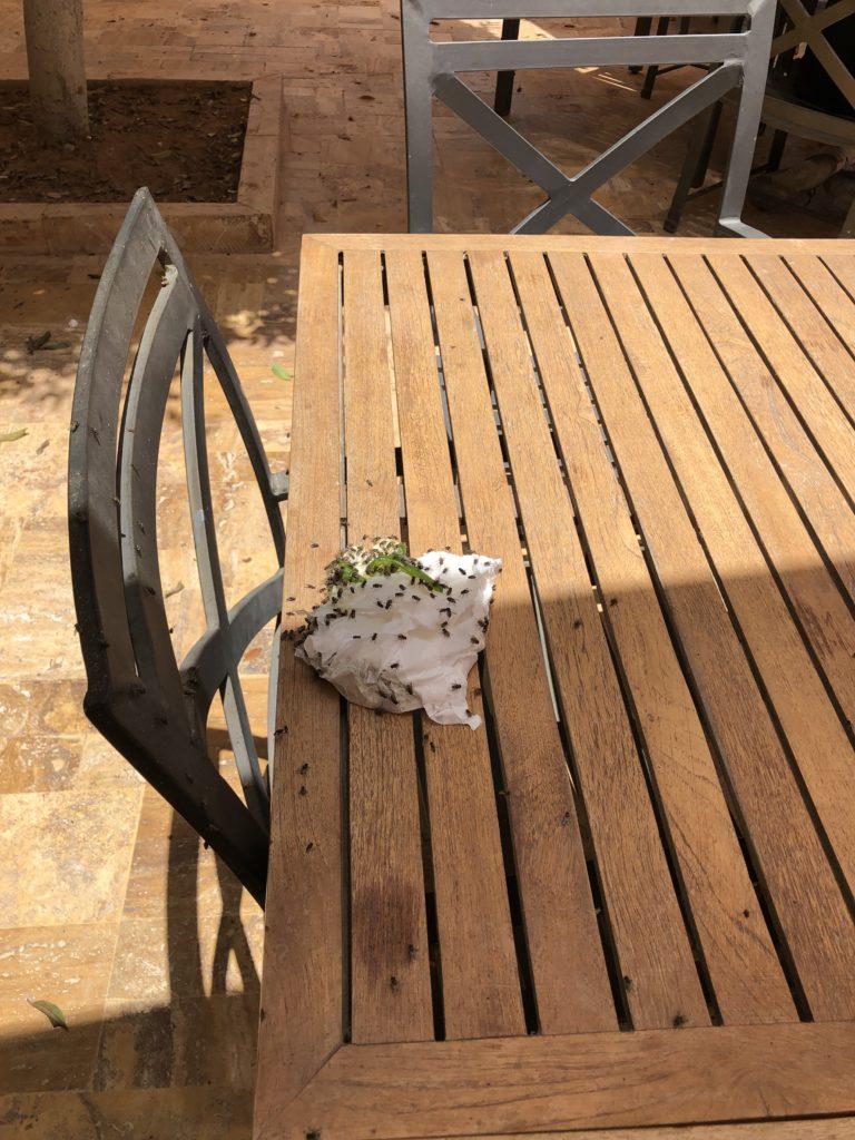 Talihsiz serüvenler : Petra'daki sinekler